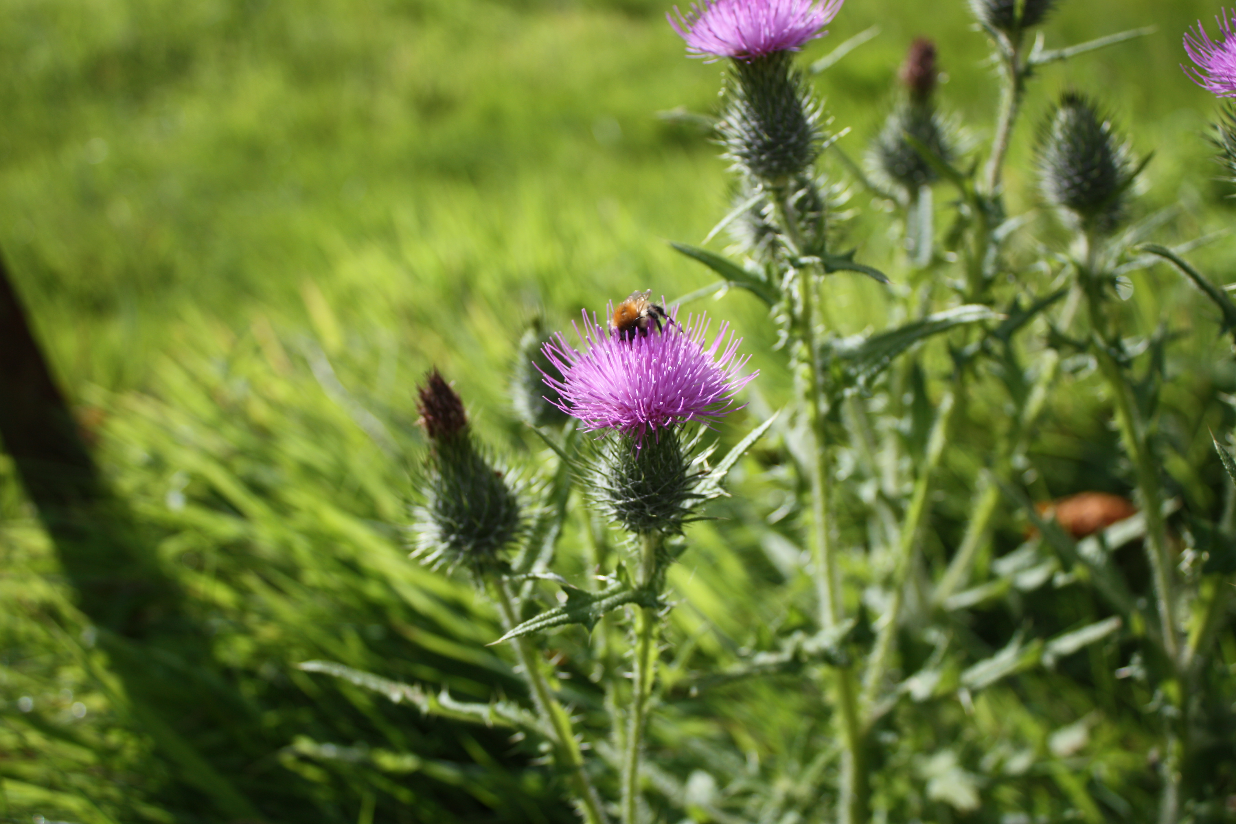 Thistle & Bee Kandu Marketing